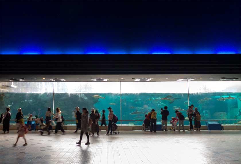 須磨水族園の大水槽