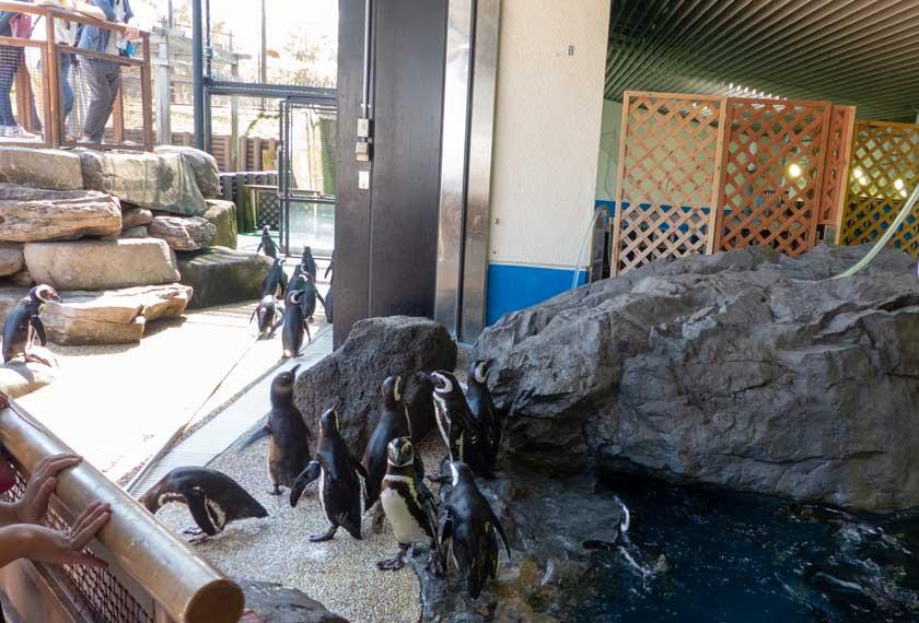 須磨水族園のペンギンたち
