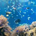 建て替え間近!今だけの「須磨海浜水族園(スマスイ)」をもっと楽しもう