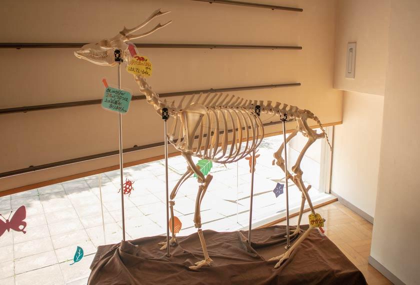 動物の骨の展示