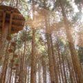 【体験レポ】「フォレストアドベンチャー・神戸六甲山」に行ってきました