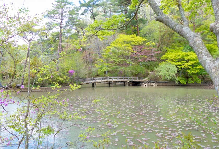 神戸市立森林植物園の長谷池