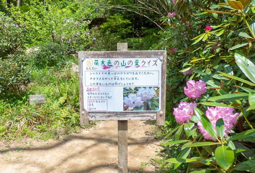 神戸市立森林植物園の萌木色の山の葉クイズ