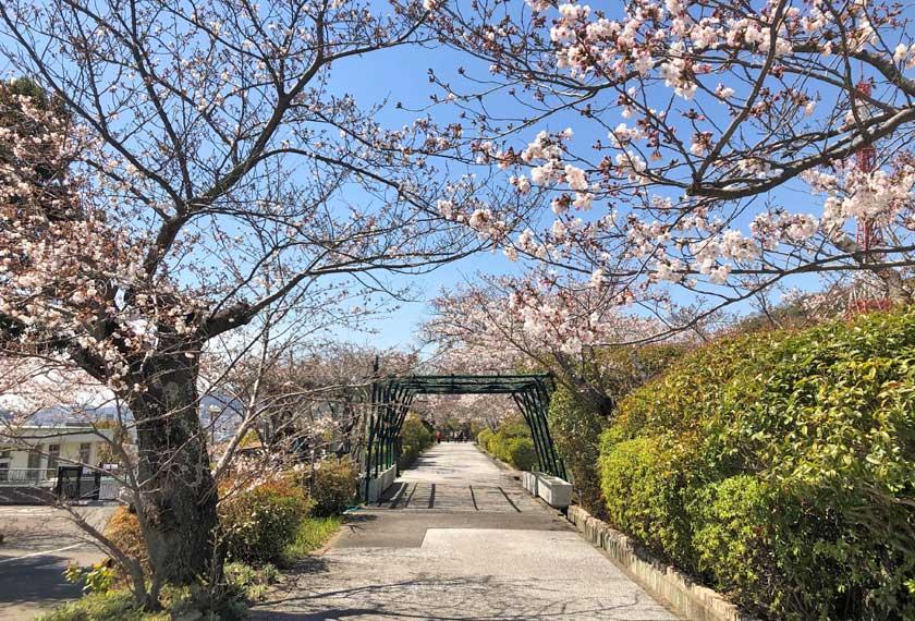 水の科学博物館の桜の木200本