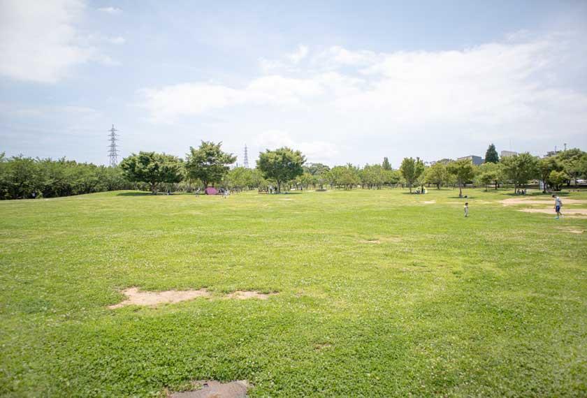 遊具があるエリアの芝生広場