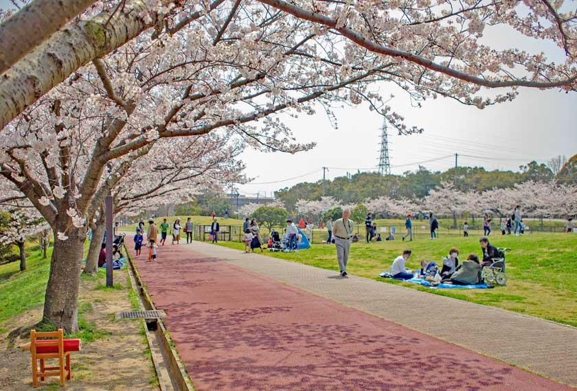 公園の両端に桜並木
