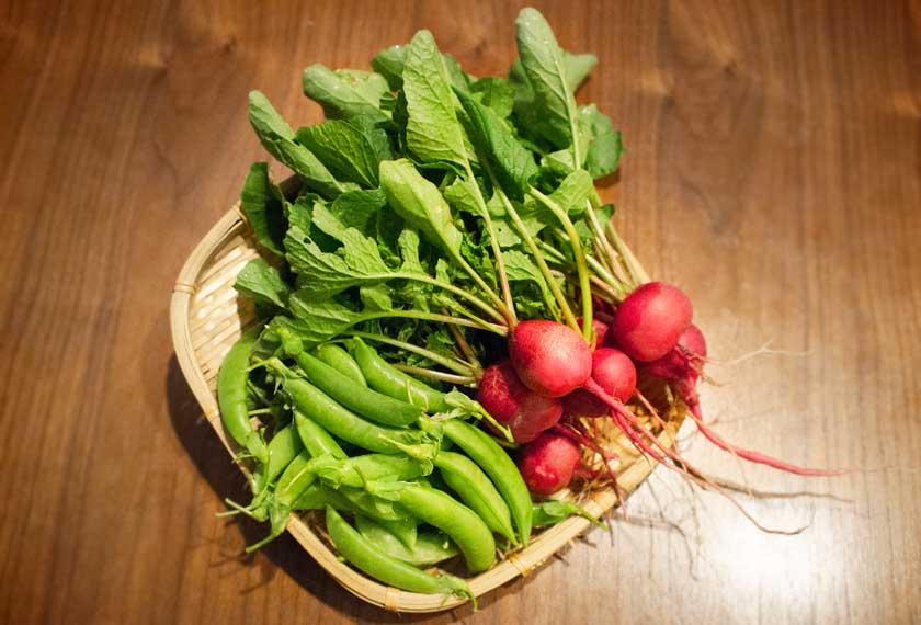 里山体験で収穫したラディッシュとスナップエンドウ