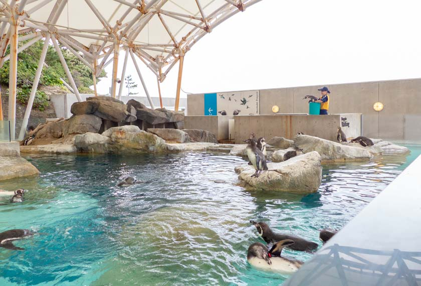 水槽で暮らすペンギン