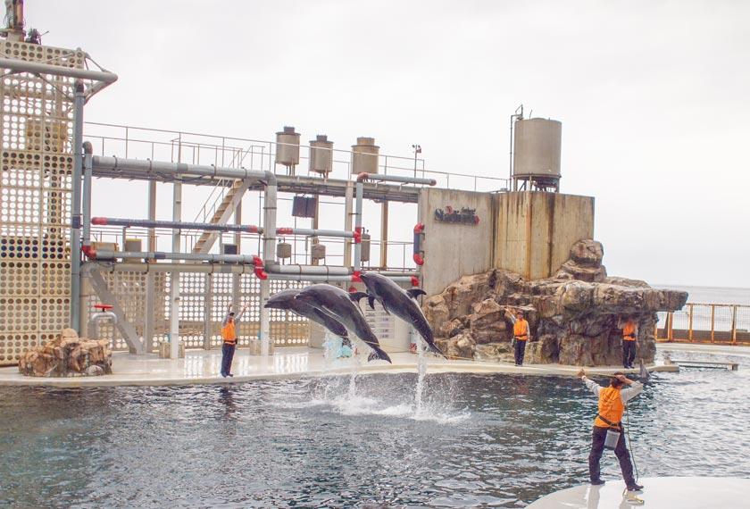 イルカショーで高く飛び上がる3匹のイルカ