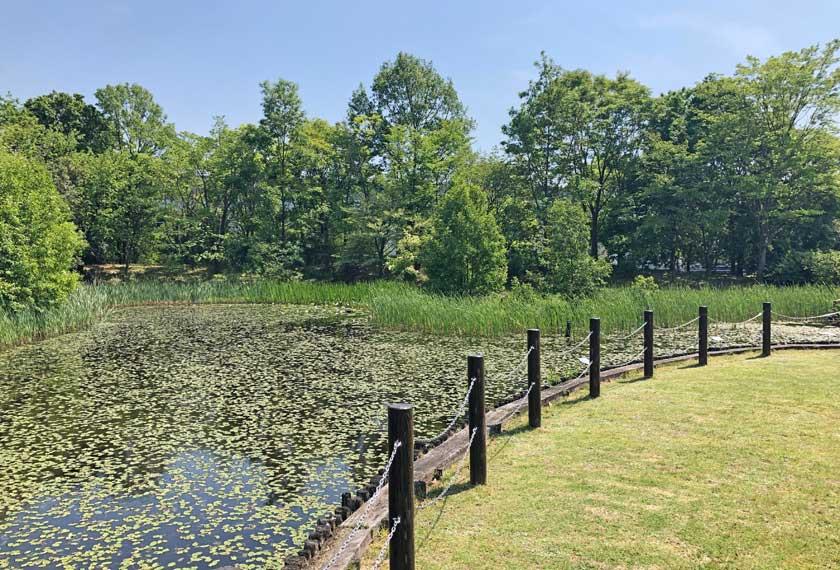 カワバタモロコなどが生息する池
