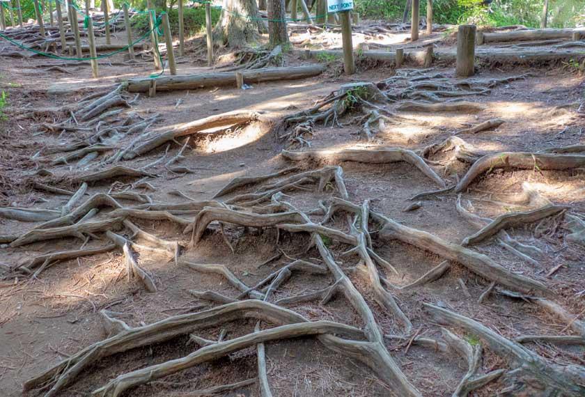 木の根が沢山張った足元