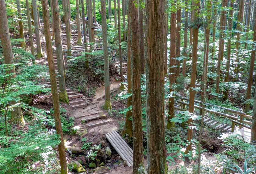 後半は深い森の中