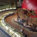 国内最大級の公立博物館!丹波竜にも会える「人と自然の博物館」