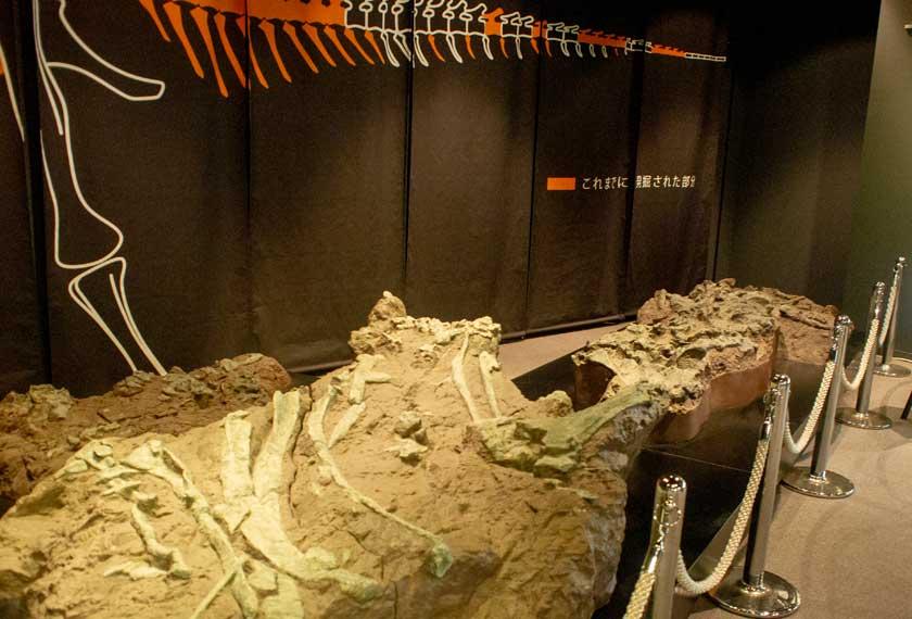丹波竜の化石レプリカ
