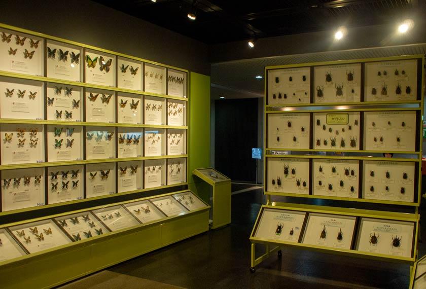 大量の昆虫の標本