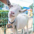 姫路城が間近に見える!「姫路市立動物園」で生き物とふれあう