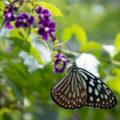 年中楽しめる温室には蝶が1000羽!「伊丹市昆虫館」で昆虫の世界を覗く