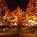 【終了しました】神戸市立森林植物園・紅葉のライトアップ|12月1日まで開園時間延長
