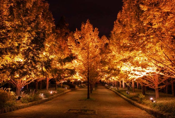 kobe-municipal-arboretum-night-10