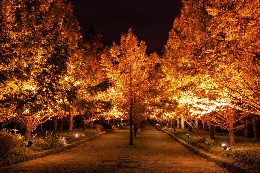 kobe-municipal-arboretum-night-10
