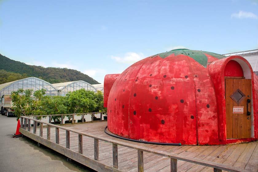 very_berry_farm_18